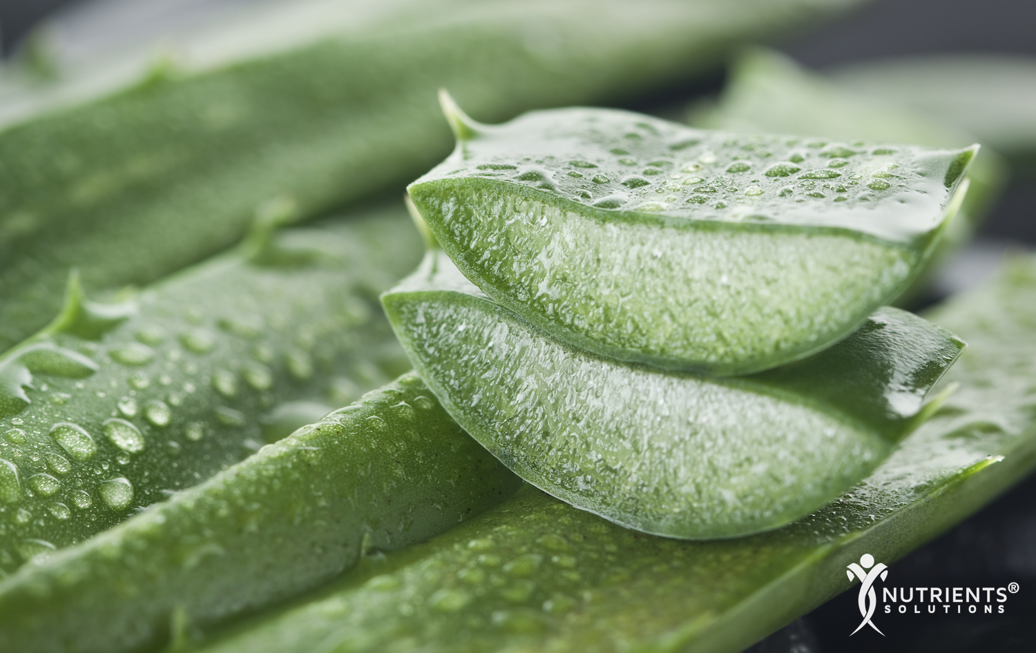 Discover the Benefits of Aloe Vera