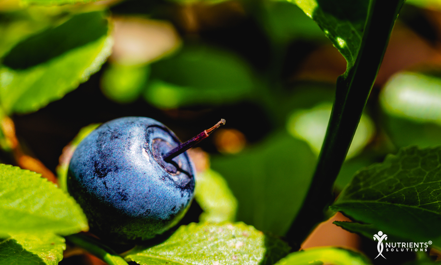 The Health-Enhancing and Disease-Fighting Properties of Bilberry