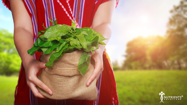 The Health Benefits of Gymnema Silvestre